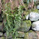 Hebden Bridge stones