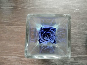 brussels blue rose