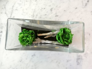 brussels green roses