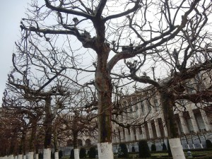 brussels trees 2