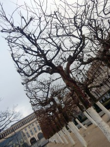 brussels trees 3