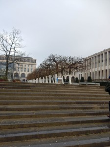 brussels trees 5