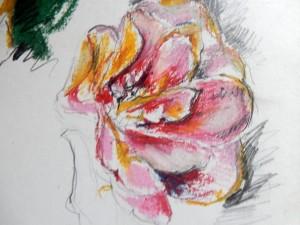 camelia 1 closeup