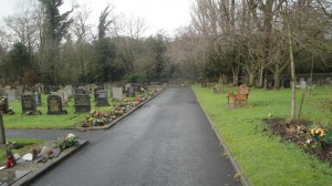 trees and bench at the graveyard