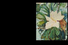 large-french-magnolia-detail-flower-ks-image-enlarged