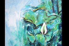 resized-stillwater-lily
